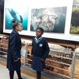 School excursion, Underwater Photographer of the Year 2017, Photo exhibition, Chavonnes Battery