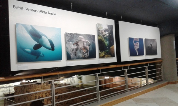 Underwater Photographer of the Year 2017, Chavonnes Battery, V&A Waterfront